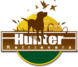 Hunter Retrievers – North Carolina Labrador Retriever Breeder